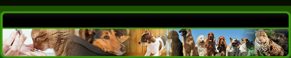 Miami animal clinic header